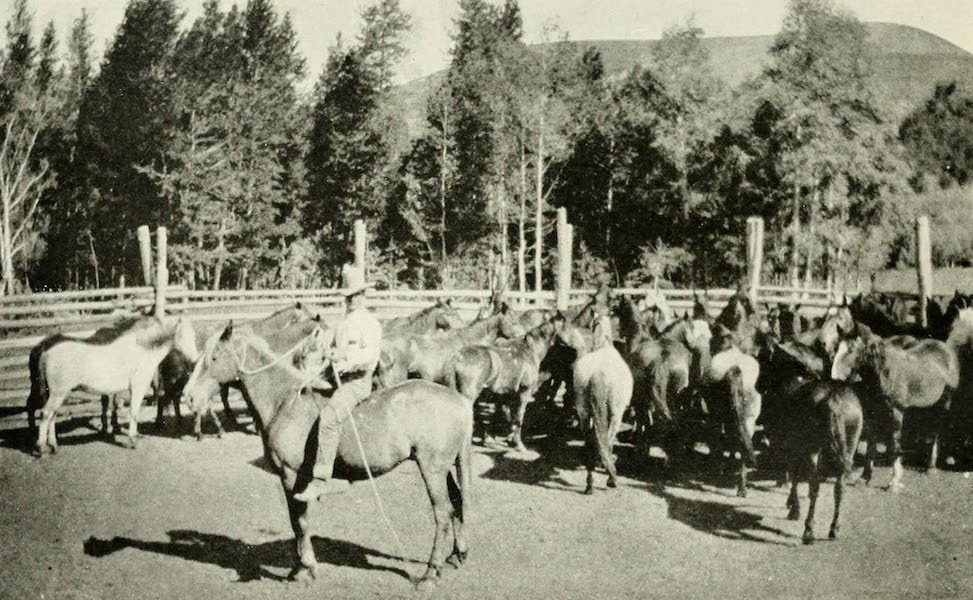 Utah, the Land of Blossoming Valleys - A Forest Ranger's Corral in a Utah National Forest (1922)