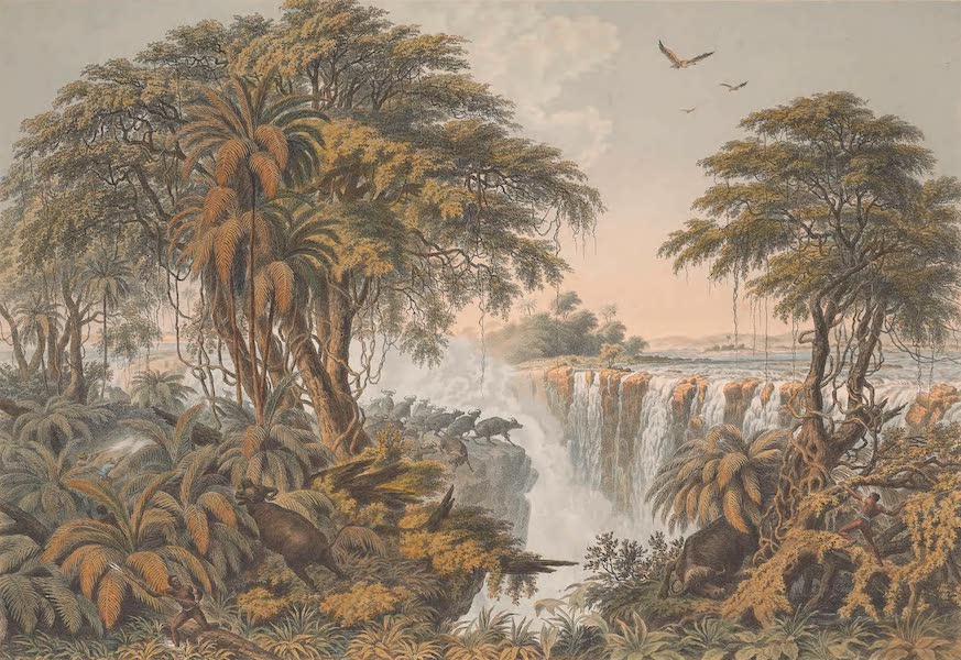 Victoria Falls, Zambesi River - Herd of Buffaloes Driven to the Edge of the Chasm (1865)