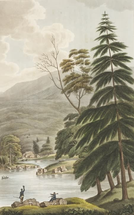 Views in Australia or New South Wales - Scene up the River Huon (1825)