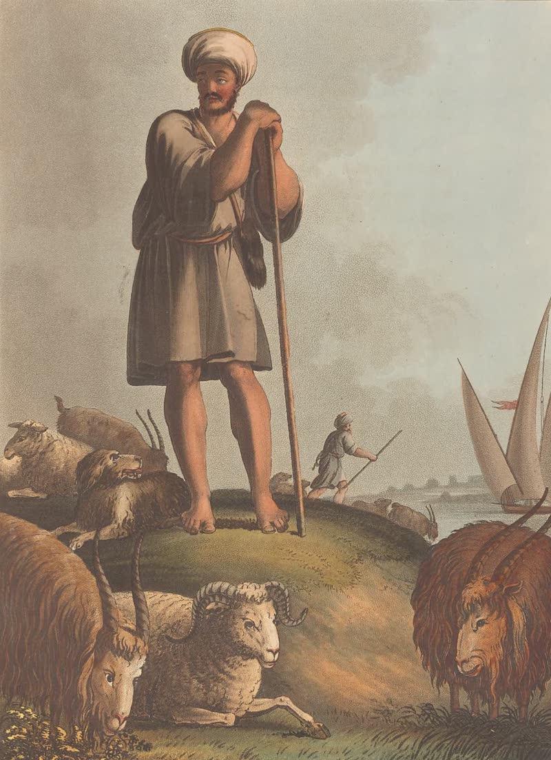 An Egyptian Herdsman