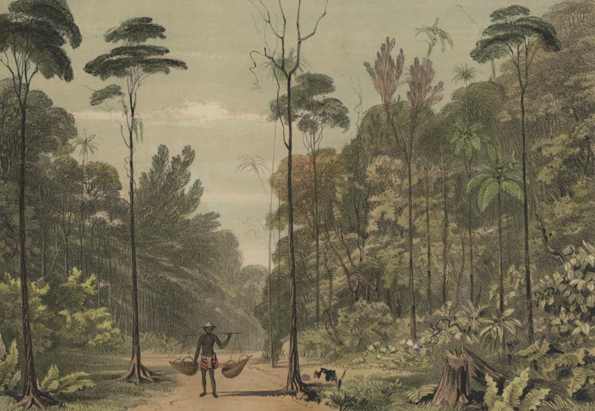 Views in the Eastern Archipelago - View in the Jungle, Singapore (1847)