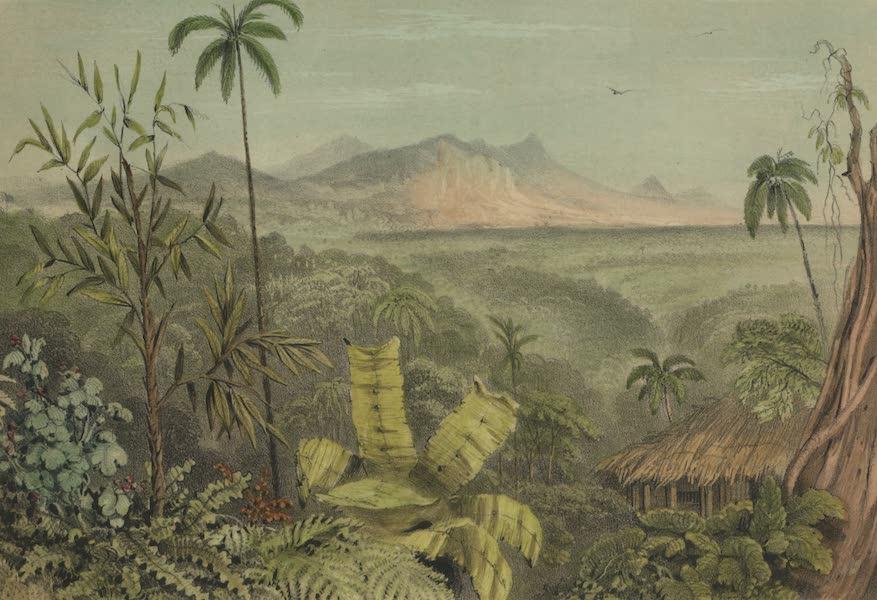 Views in the Eastern Archipelago - Jungle View, Sarawak (1847)