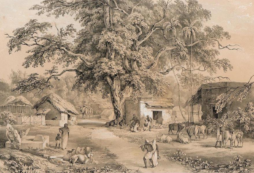 Views of Calcutta and its Environs - View in the Village of Sheebpore (1848)