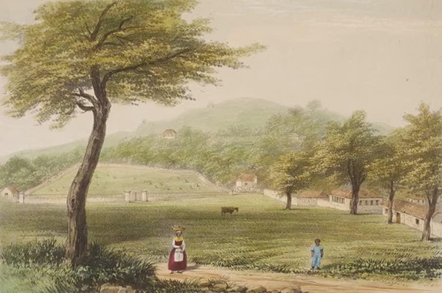 Views of the Island of Dominica - The Savannah (1849)