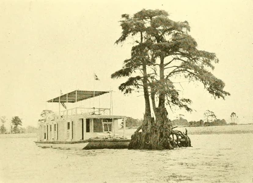"""Virginia: the Old Dominion - A Visit to the """"Lone Cypress"""" (1921)"""