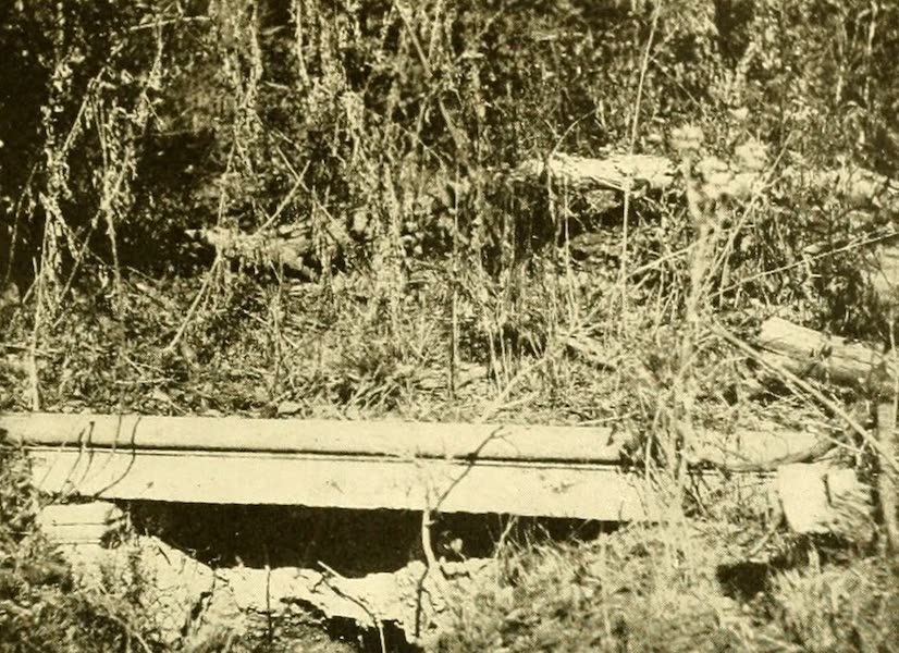 Virginia: the Old Dominion - The Forest Tomb (1921)