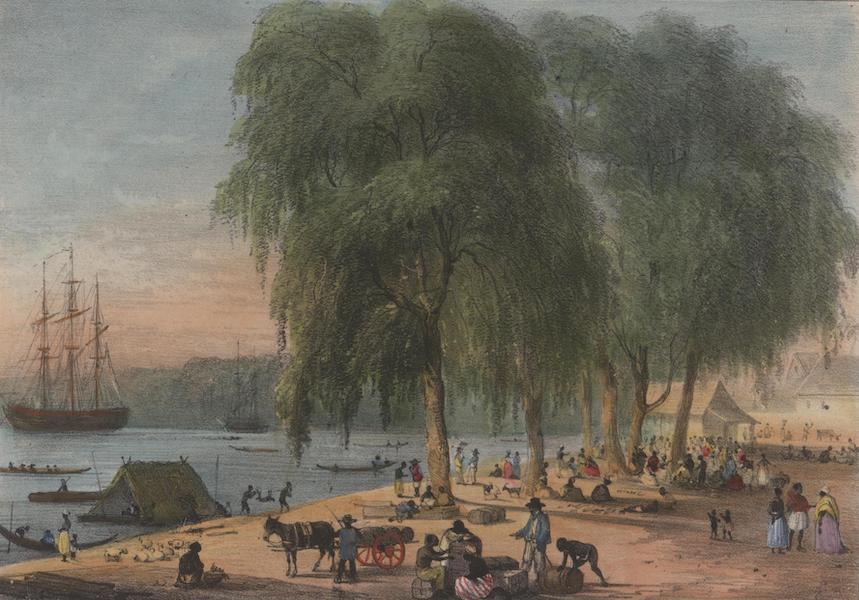 Voyage a Surinam - Marche au Poisson et au Bois, au bord de l'eau, a Paramaribo (1839)