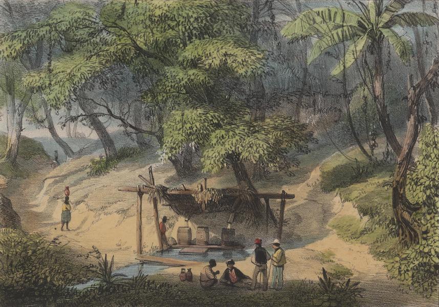 Voyage a Surinam - Source d'eau froide a la Savane des Juifs (1839)