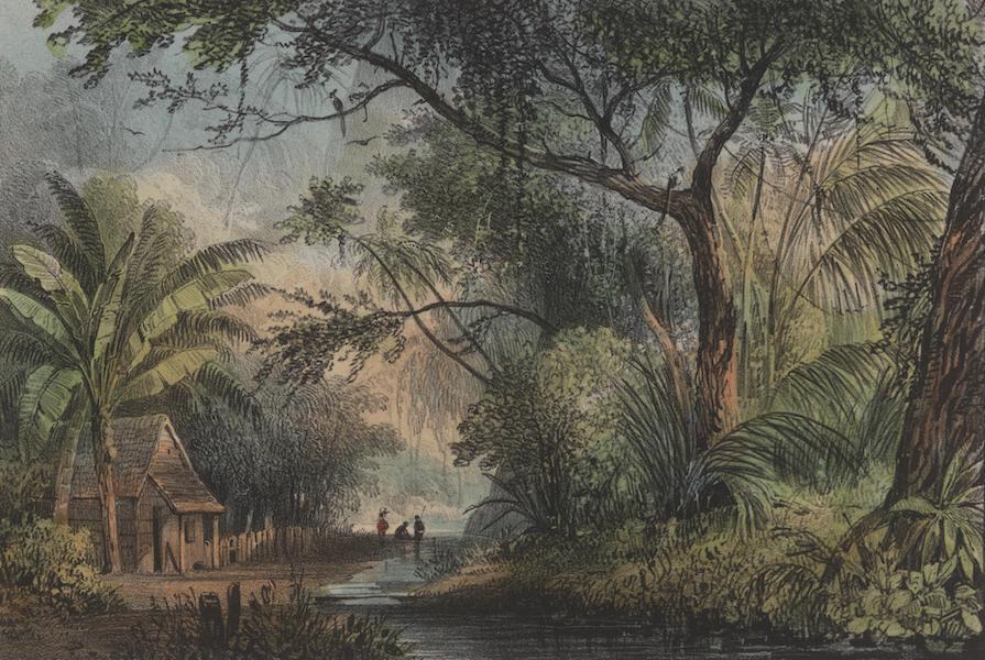 Voyage a Surinam - Maison de planteur pres de la source du Parakreet (1839)
