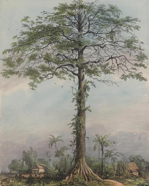 Voyage a Surinam - Kutten-triehout (1839)