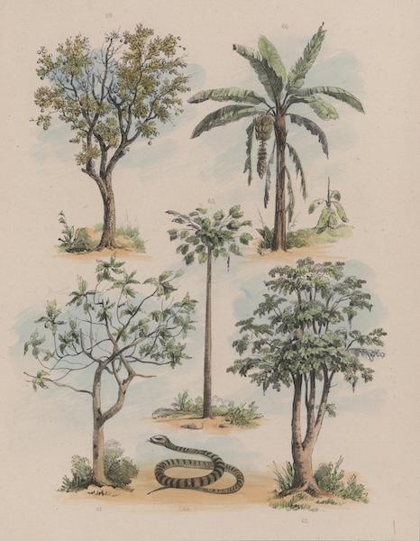 Voyage a Surinam - Oranger, Bananier, Arbre a pain, Papaya carica male, Papaya carica femelle & Serpent niger et albus (1839)