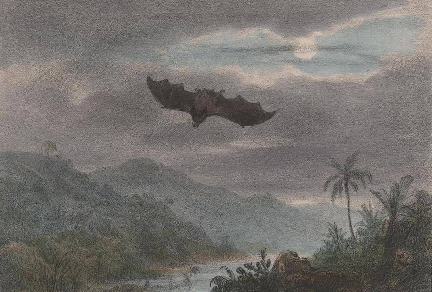 Voyage a Surinam - Vampire (1839)