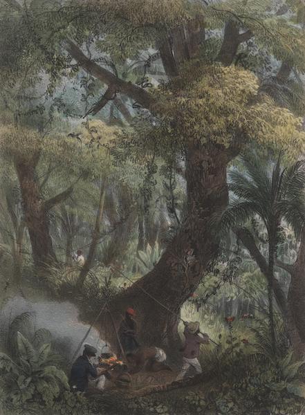 Voyage a Surinam - Chasse aux papillons (1839)