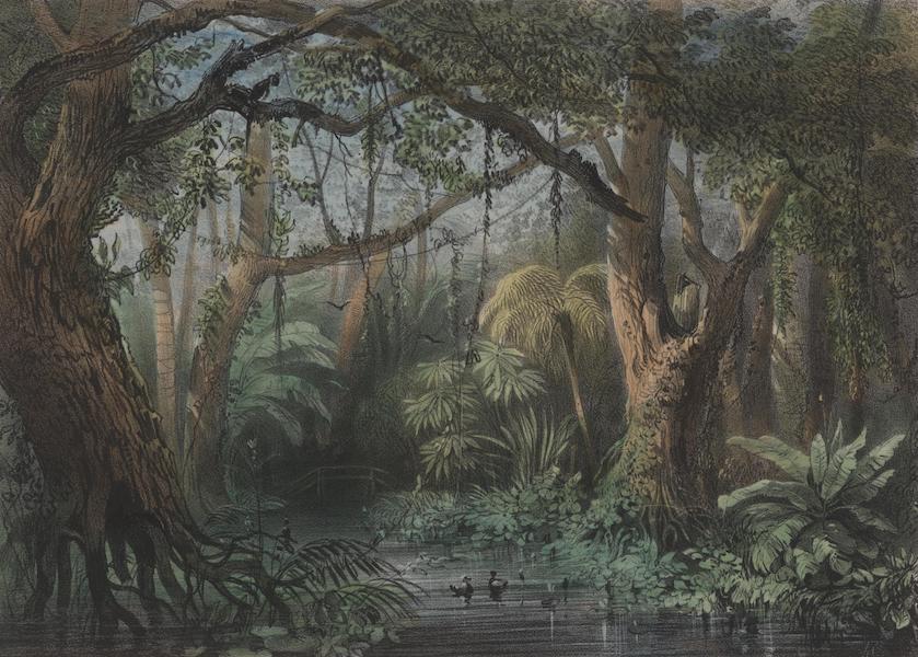 Voyage a Surinam - Des marais (1839)