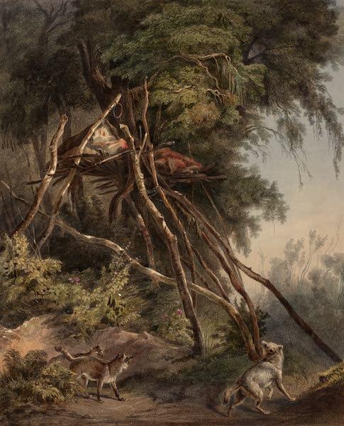 Voyage dans l'Interieur de l'Amerique du Nord Atlas - Assiniboin Baumgräber. / Tombeaux des Assiniboins dans des arbres. / Tombs of Assiniboin Indians on trees. (1840)