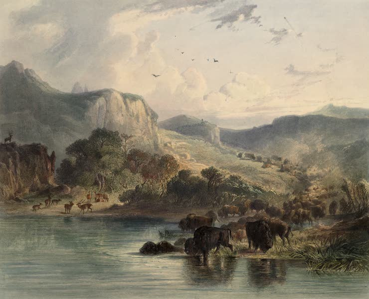 Voyage dans l'Interieur de l'Amerique du Nord Atlas - Bisonheerden und Elkhirsche am obern Missouri. / Troupeauz de bisons et d'elks sur le haut Missouri. / Herds of bisons and elks on the upper Missouri. (1840)