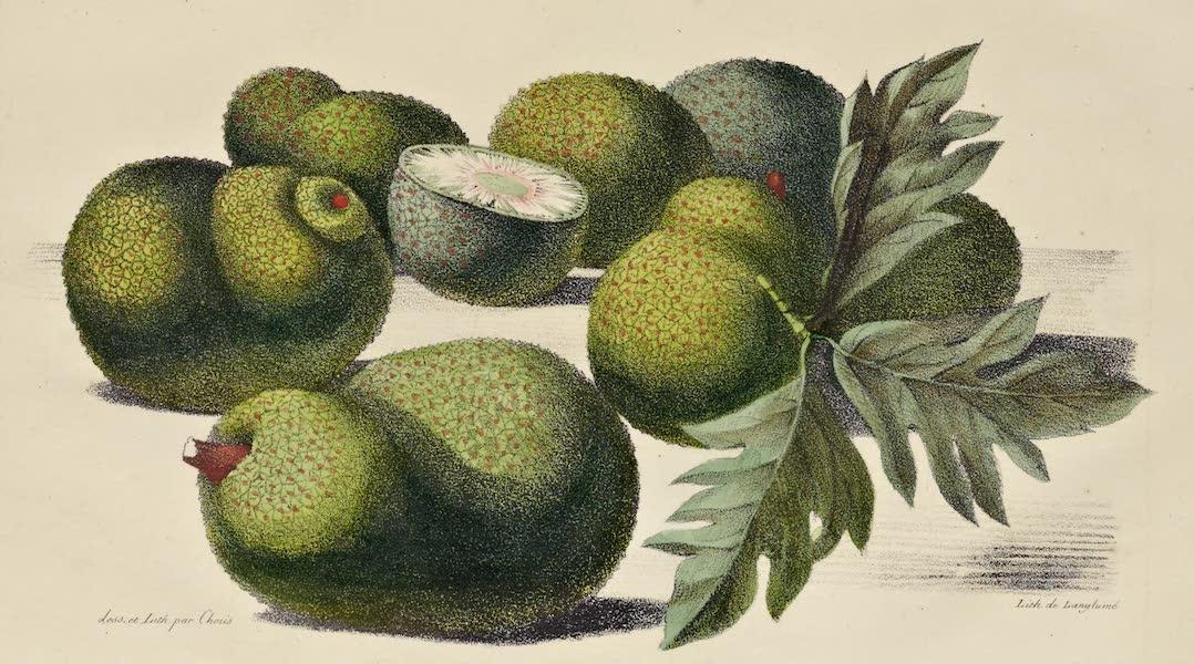 Voyage Pittoresque Autour de Monde - Fruit de l'arbre a pain (1822)