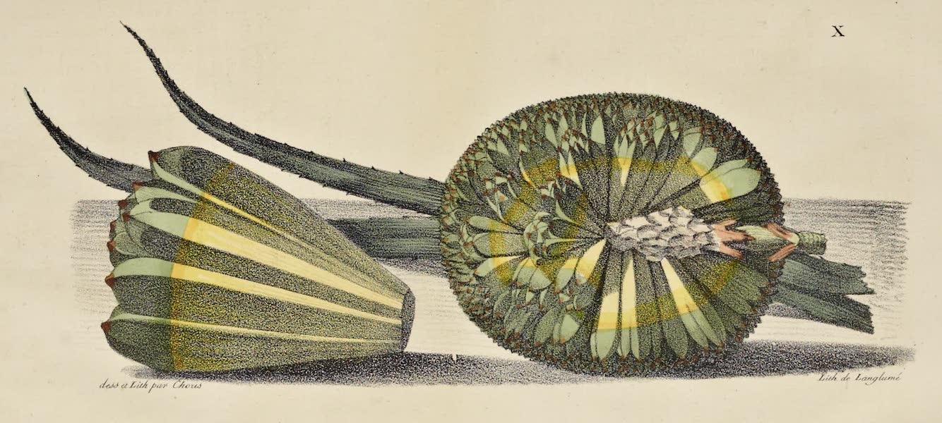 Voyage Pittoresque Autour de Monde - Fruit du Baquois des isles Radak (1822)