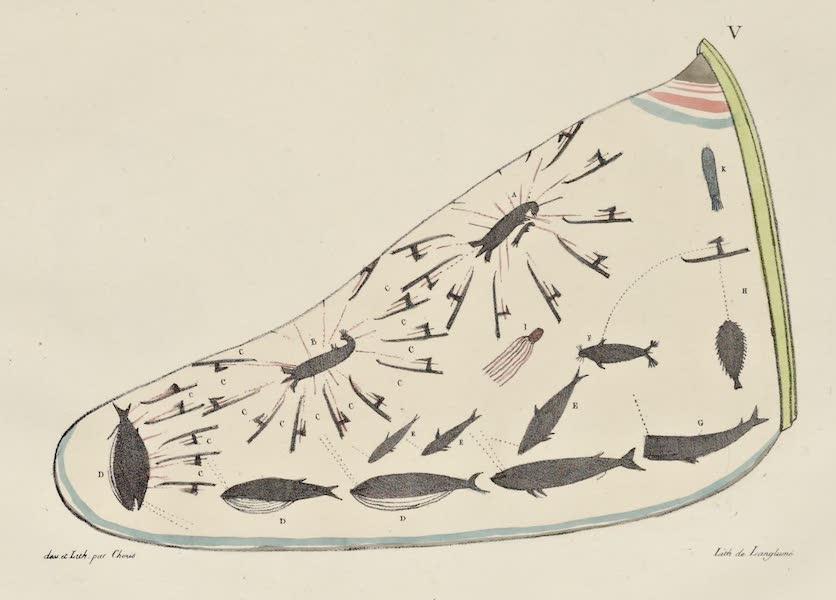 Voyage Pittoresque Autour de Monde - Chapeau des habitans des isles Aleoutiennes sur lequel sont peints divers animaux marins (1822)