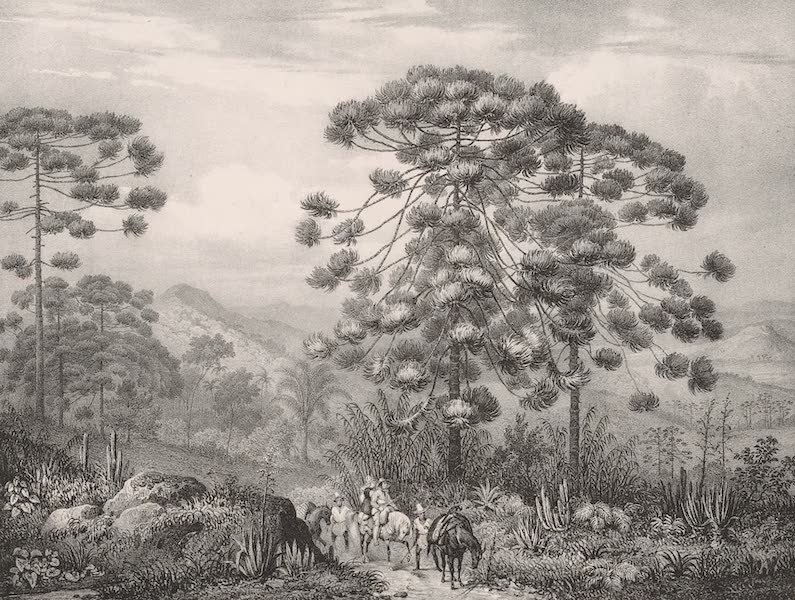 Voyage Pittoresque dans le Bresil - Serra Ouro Branco dans la Province de Minas Geraes (1835)