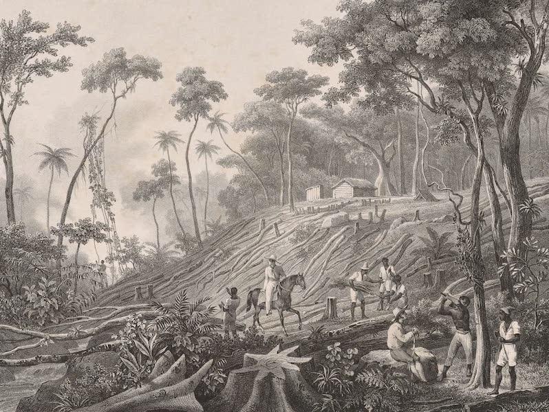 Voyage Pittoresque dans le Bresil - Defrichement d'une Foret (1835)