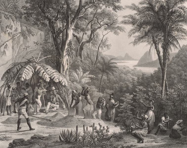 Voyage Pittoresque dans le Bresil - Recolte du Cafe (1835)
