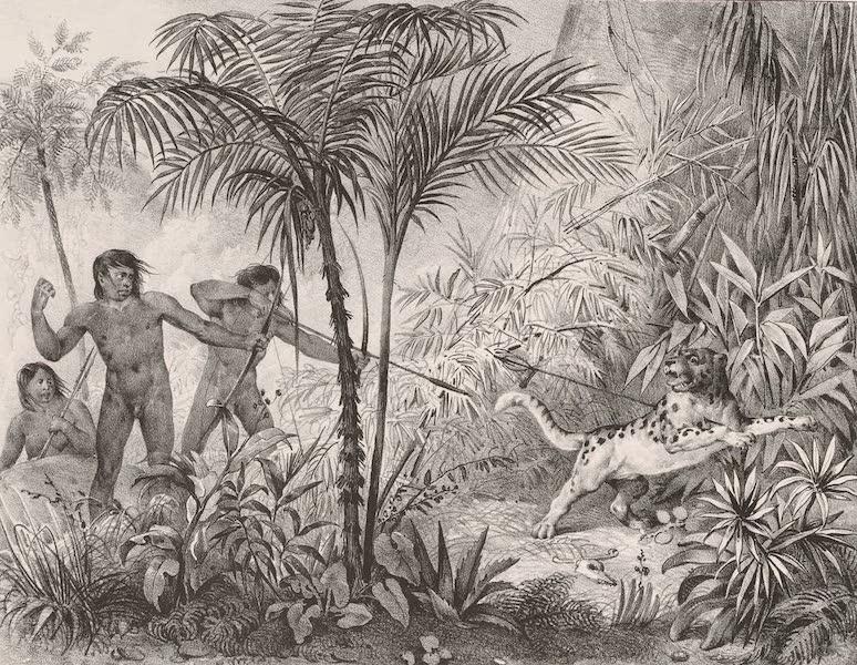 Voyage Pittoresque dans le Bresil - Chasse au Tigre (1835)