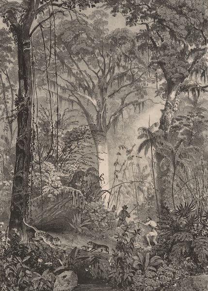 Voyage Pittoresque dans le Bresil - Chasse dans une Foret Vierge (1835)