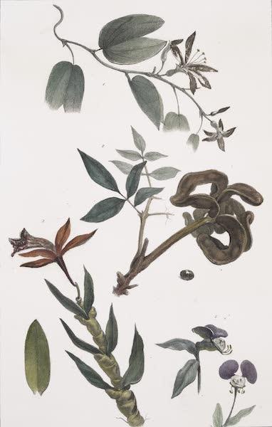 Voyage Pittoresque et Historique au Bresil Vol. 1 - Vegetaux des Forets Vierges du Bresil [I] (1834)