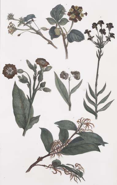 Voyage Pittoresque et Historique au Bresil Vol. 1 - Vegetaux des Forets Vierges du Bresil [II] (1834)