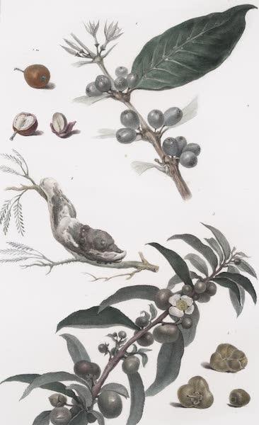Voyage Pittoresque et Historique au Bresil Vol. 1 - Vegetaux du Bresil (1834)