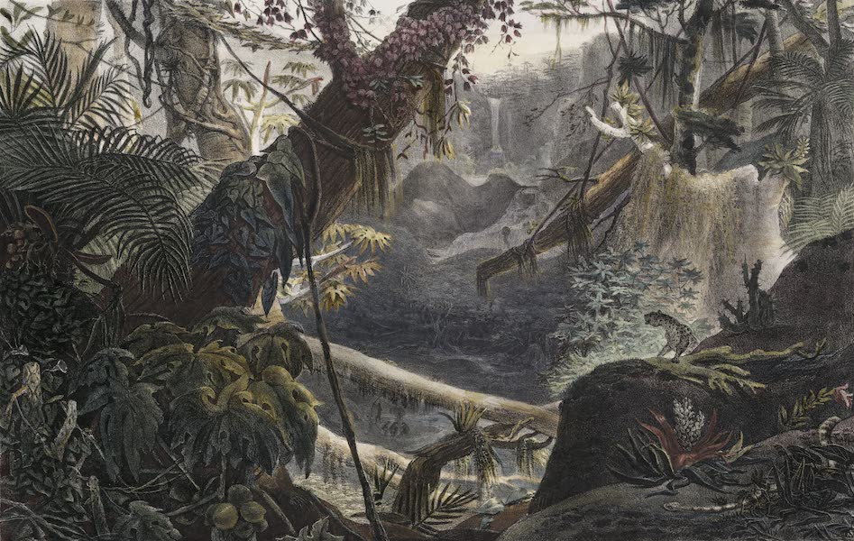 Voyage Pittoresque et Historique au Bresil Vol. 1 - Vallee da Serra do Mar (Chaine de Montagnes pres de la Mer.) (1834)