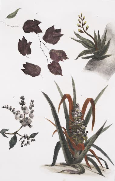 Voyage Pittoresque et Historique au Bresil Vol. 1 - Vegetaux des Forets Vierges [I] (1834)