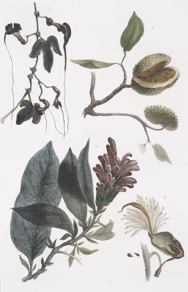 Voyage Pittoresque et Historique au Bresil Vol. 1 - Vegetaux des Forets Vierges [II] (1834)