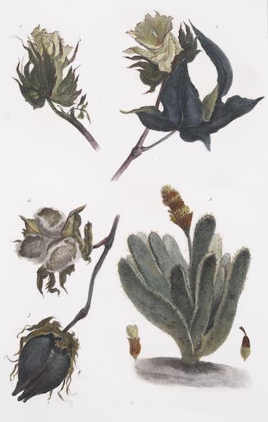 Voyage Pittoresque et Historique au Bresil Vol. 1 - Vegetation du Bresil (1834)
