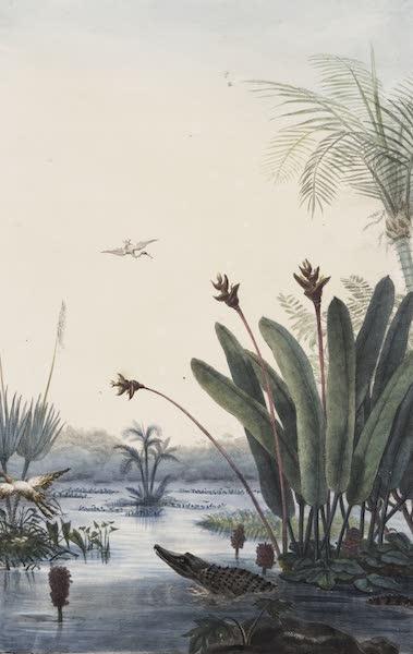 Voyage Pittoresque et Historique au Bresil Vol. 1 - Eliconia (1834)
