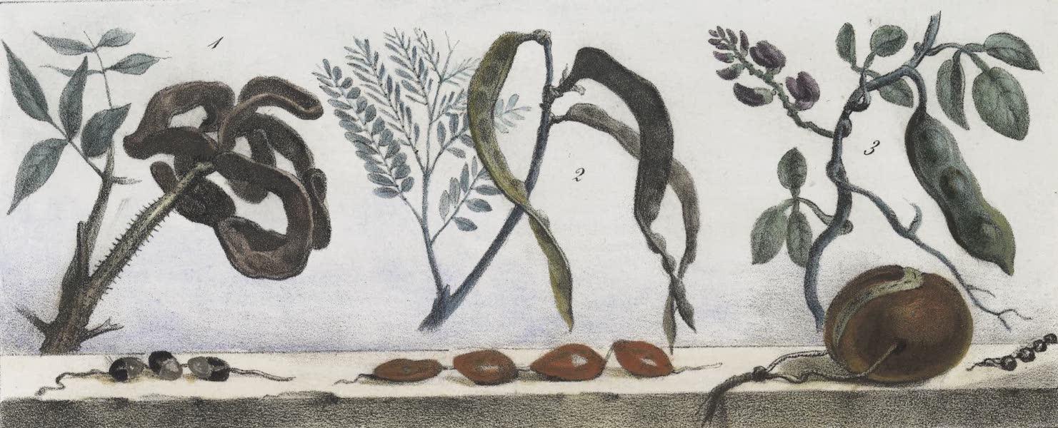 Voyage Pittoresque et Historique au Bresil Vol. 1 - Graines employees pour les colliers (1834)