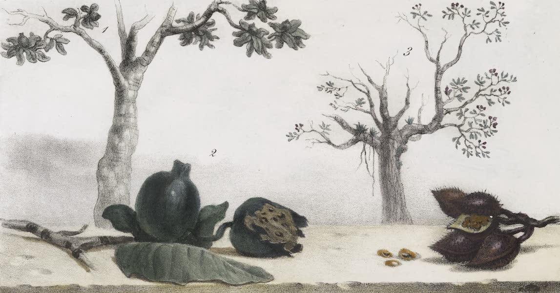 Voyage Pittoresque et Historique au Bresil Vol. 1 - Vegetaux pour le tatouage (1834)