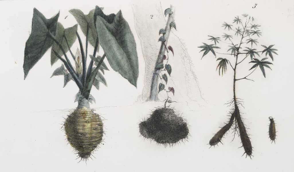 Voyage Pittoresque et Historique au Bresil Vol. 1 - Plantes nutritives (1834)