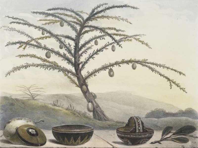 Voyage Pittoresque et Historique au Bresil Vol. 1 - Le Calebassier (1834)