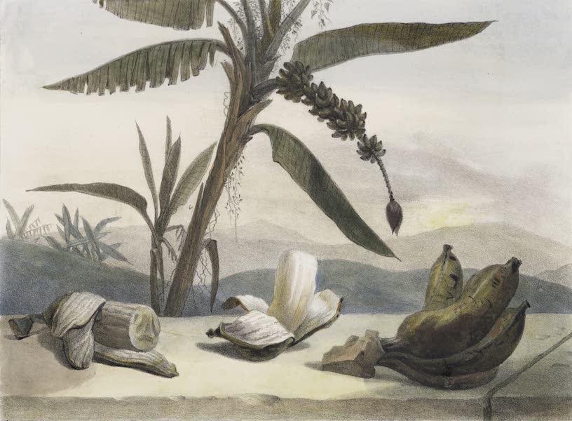 Voyage Pittoresque et Historique au Bresil Vol. 1 - Le Bananier (1834)