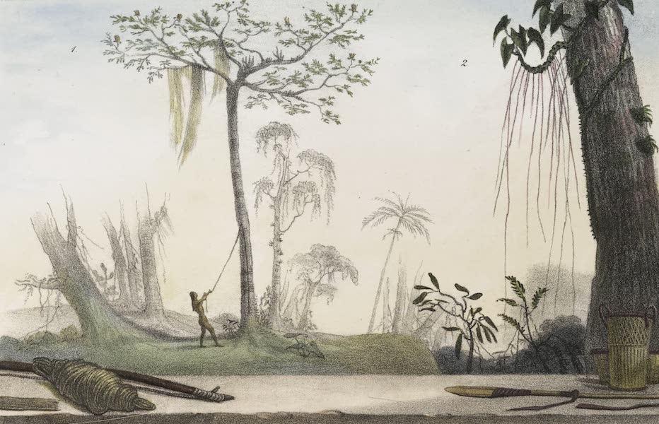 Voyage Pittoresque et Historique au Bresil Vol. 1 - Vegetaux qui Servent a faire des Liens - Imbire & Cipo Imbe (1834)