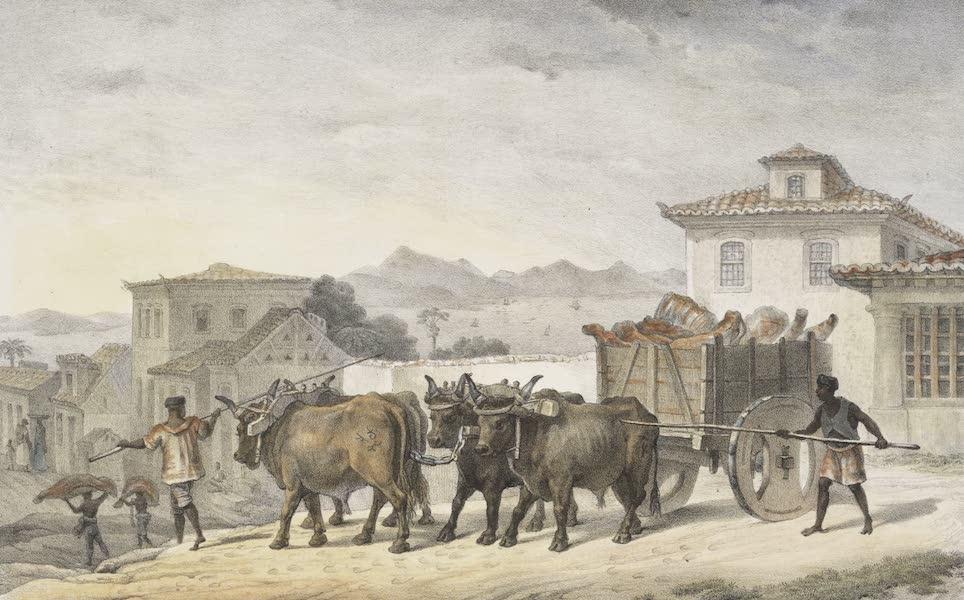 Voyage Pittoresque et Historique au Bresil Vol. 2 - Transport de Viande de Boucherie (1835)