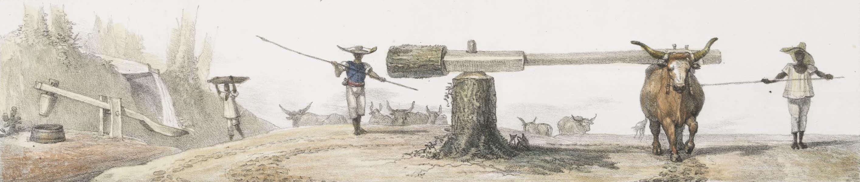 Voyage Pittoresque et Historique au Bresil Vol. 2 - Joug tournant pour dompter les Boeufs (1835)