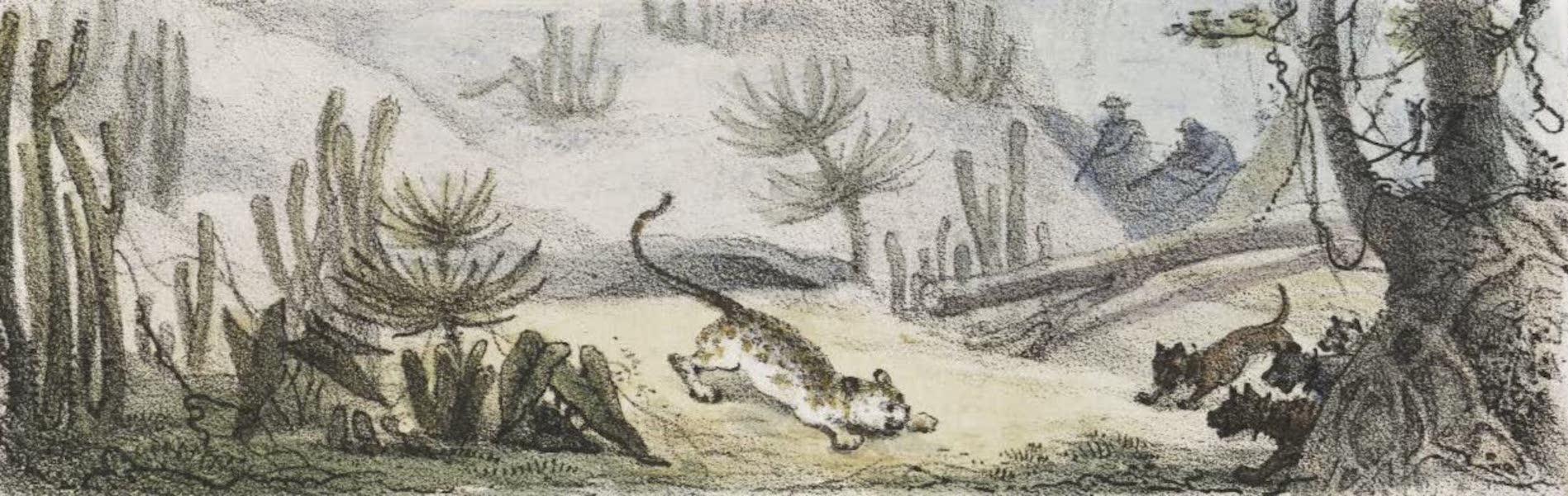 Voyage Pittoresque et Historique au Bresil Vol. 2 - Meme Chasse dans les Forets Vierges [II] (1835)