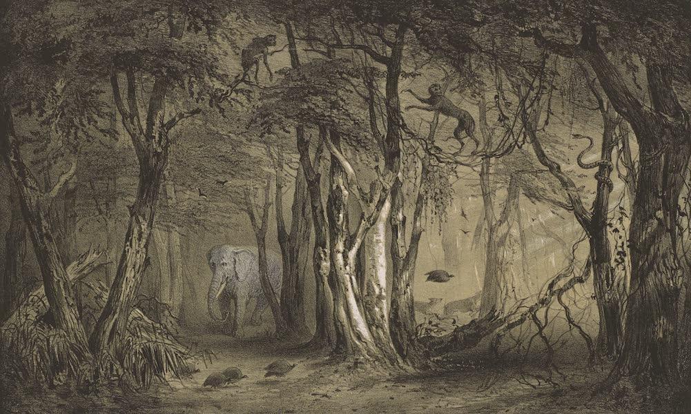 Voyages au Soudan Oriental et Dans l'Afrique Septentrionale - Planche 7. Forêt vierge des bords du fleuve Bleu. (1852)
