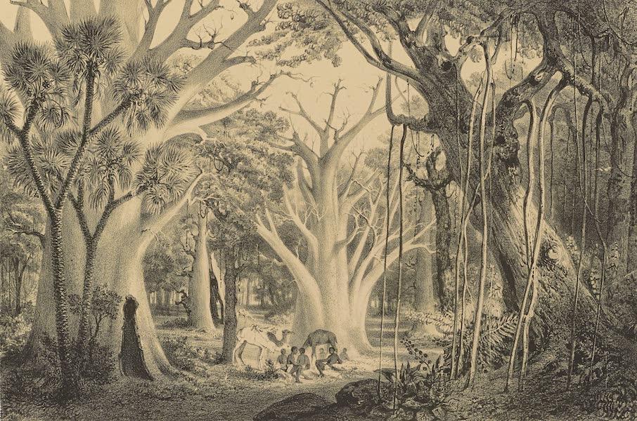 Voyages au Soudan Oriental et Dans l'Afrique Septentrionale - Planche 9. Forêt vierge d'Afrique. (1852)