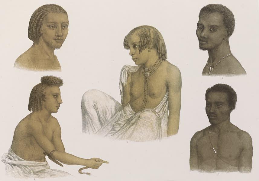 Voyages au Soudan Oriental et Dans l'Afrique Septentrionale - Planche 29. Types de figures de diverses contrées. (1852)