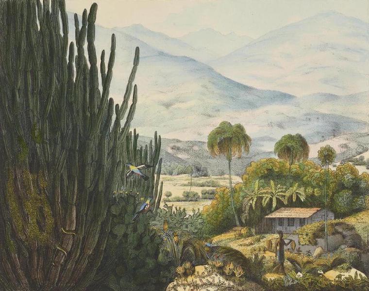 Vues et Paysages des Regions Equinoxiales - Vue dans l'interieur de l'Ile de Ste. Catherine (Bresil) (1826)