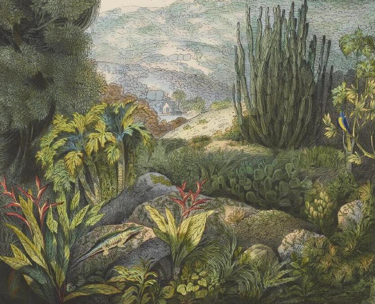 Vues et Paysages des Regions Equinoxiales - Ile de Ste. Catherine (Bresil) (1826)